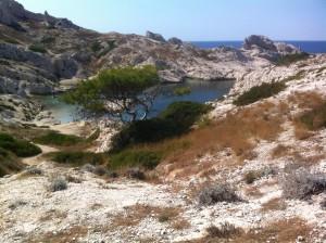 Rejoindre la calanque de la Crine est déjà une très belle opportunité de traverser, en une heure à partir du port de Frioul, de part en part l'ile de Pomègues, l'une des deux îles, avec l'île de Ratonneau, de l'archipel du Frioul à 20' en bateau du Vieux Port de Marseille. La calanque de la Crine est un lieu magique pour un bain de mer.